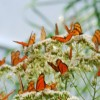Flores que Voam em Campos do Jordão - Imoveis em Campos do Jordão - Blog
