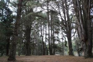 Parque Estadual Horto Florestal em Campos do Jordão